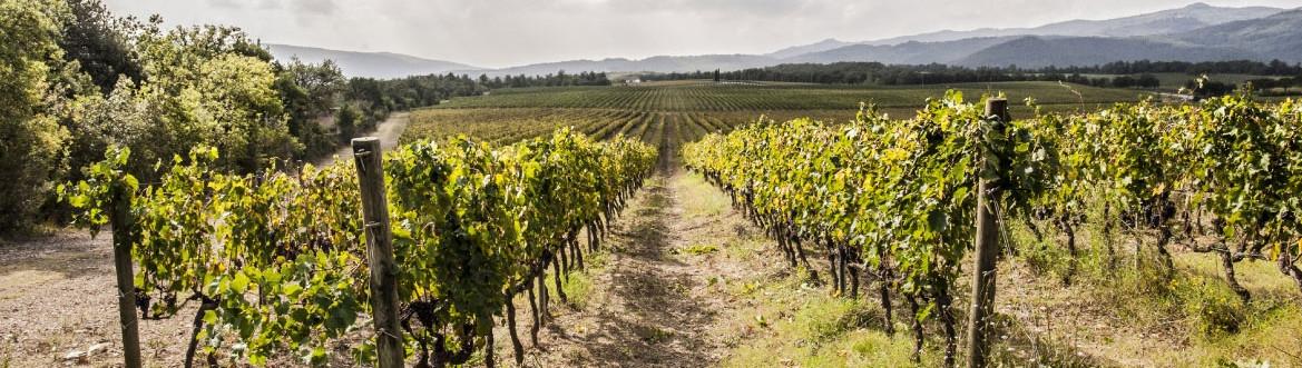 vina iz toskane - okusi italije